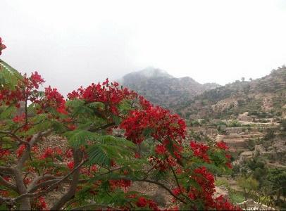 """Photo of الأرصاد ينبه من تأثيرات الكتلة الهوائية الباردة على """"12"""" محافظة"""
