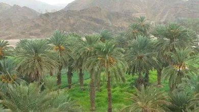 Photo of حالة الطقس المتوقعة حتى عصر الأحد 29 موفمبر/تشرين ثان 2020