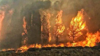 Photo of حريق هائل يلتهم المنازل والأشجار في لبنان
