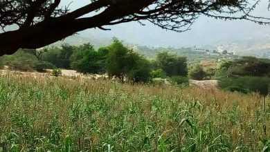 Photo of الأرصاد: ارتفاع طفيف في درجات الحرارة الصغرى