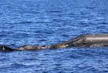Photo of المنظمة الدولية للهجرة: مهربون يلقون بعشرات المهاجرين الأفارقة في البحر