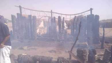 Photo of مخطط يستهدف البيئة في تهامة .. احراق وقطع الالاف من النخيل